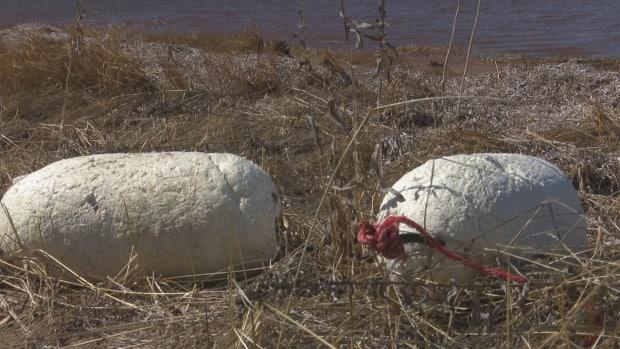 A styrofoam buoy is shown in this file photo. The replacement plastic buoys are more durable than the Styrofoam ones. (Nicole Williams/CBC - image credit)