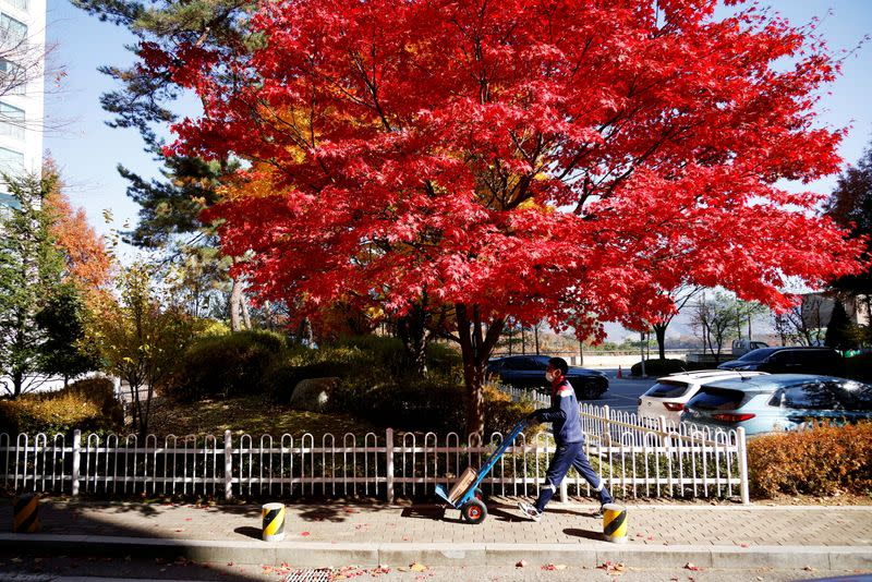 Jeong Sang-rok, a parcel delivery worker for Hanjin Transportation, pushes a trolley with a package past a red maple tree in Gwangju