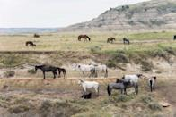 """<p><strong>Theodore Roosevelt National Park</strong></p><p><a href=""""https://www.nps.gov/thro/index.htm"""" rel=""""nofollow noopener"""" target=""""_blank"""" data-ylk=""""slk:Theodore Roosevelt National Park"""" class=""""link rapid-noclick-resp"""">Theodore Roosevelt National Park</a> in Western North Dakota is named after the naturalist, rancher, and 26th President of the United States. Activities are endless from hiking, camping, or just driving through the park if you don't have a lot of time. Be sure to see the free-roaming bison!</p>"""
