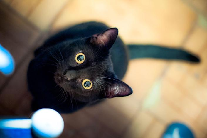 <p>Embrace the superstition with these mystical, mysterious and witchy names perfect for that feline who just gives off that mystical, spiritual aura. </p><p>•Abracadabra</p><p>•Cosmos</p><p>•Eclipse </p><p>•Elvira</p><p>•Enigma</p><p>•Kismet</p><p>•Magic</p><p>•Merlin</p><p>•Mystery</p><p>•Omen</p><p>•Phantom </p><p>•Hecate</p><p>•Conjurer</p><p>•Crow</p><p>•Black Magic</p><p>•Voodoo</p><p>•Wizard </p>