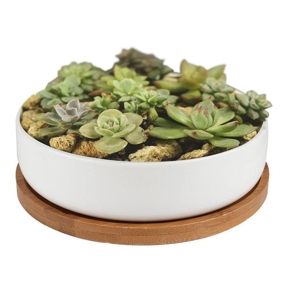 <p>Your plant baby will be taken care of in this cute little <span>Y&amp;M Succulent Planter Ceramic With Bamboo Tray</span> ($13).</p>