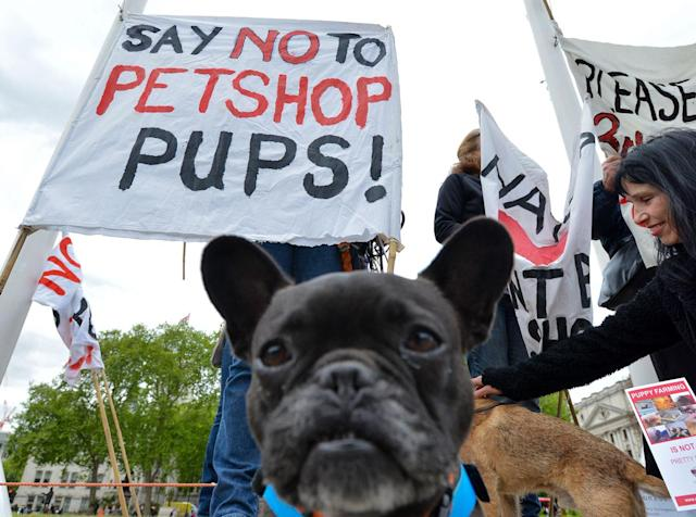 <p>Protesters against the sale of puppies in pet shops during a Ban Pet Shop Pups protest in London, May 5, 2017. (Photo: Matthew Chattle/Rex Shutterstock via ZUMA Press) </p>