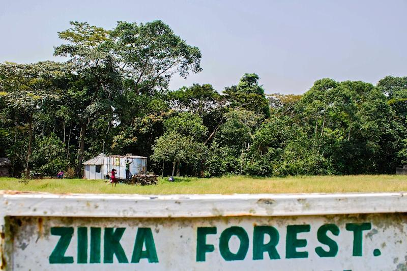 A picture taken on January 29, 2016 shows a sign post leading to the Ziika forest in Uganda near Entebbe, where the virus was first discovered (AFP Photo/Isaac Kasamani)