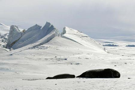 File picture of seals on a frozen section of the Ross Sea at the Scott Base in Antarctica