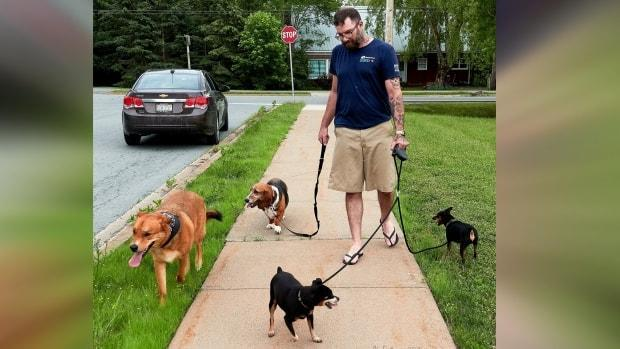 Matthew Van De Riet took in the two dogs on the left, Merlin and Kipper, after their owners were injured in a car crash. The two dogs are now friends with Van De Riet's miniature pinschers. (Submitted by Al Eastman - image credit)