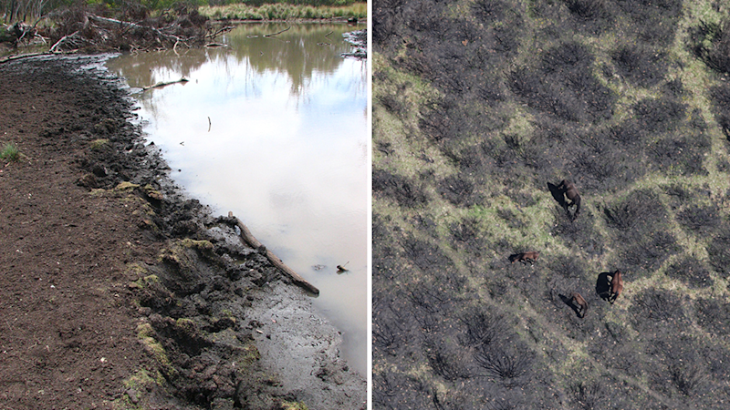 Split screen. Left - the damage done by feral horses. Right - Feral horses shot from above.