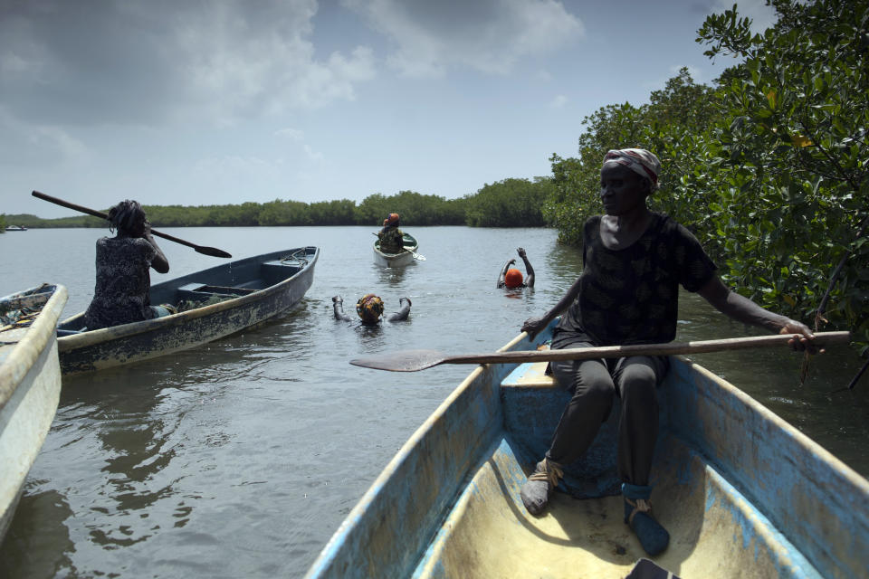 Fatou Jatta, right, holds her paddle as she works with her colleagues to catch fish and crabs from the mangrove in the estuary waters of the Gambia river in Serrekunda, Gambia, Saturday, Sept. 25, 2021. Depending on the season, women from the TRY Oyster Women's Association spend hours on the water in search of their family's dinner. As breadwinners, they can't miss a day of work and taking care of their children if side effects such as fatigue and fever briefly sideline them. Their fears are hardly exceptional, with similar hesitancies and vaccine rumors proliferating across Africa, where fewer than 4% of the population is immunized. (AP Photo/Leo Correa)