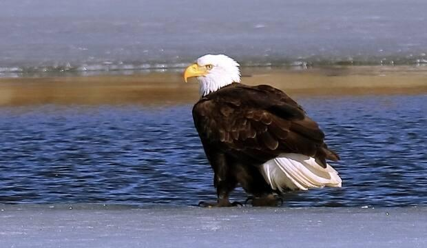 Ken Dumont said he was surprised to see the eagle and hopes it will come back one day.