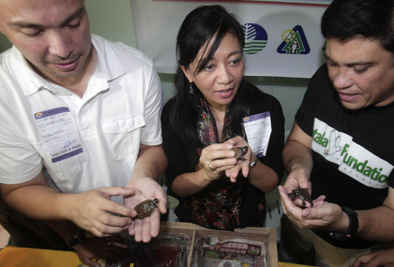 Theresa Lim, center, director of the Protected Areas and Wildlife Bureau, Abraham Mitra, left, governor of Palawan province where the turtles lived, and Miguel Zubiri of the Katala Foundation, show some of the 18 rare smuggled pond turtle, only about 120 remain in the wild, during a press conference upon arrival to their native Philippines Friday, April 27, 2012 at Manila's international airport. A Philippine wildlife official said the smuggled 18 pond turtles were confiscated at the Hong Kong airport in February from a Chinese student, along with 13 more common box turtles. (AP Photo/Pat Roque)