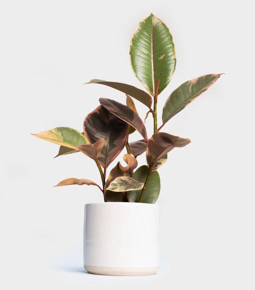 You'll never regret adding an indoor plant to your space. Plus, you'll reap the air-purifying benefits.