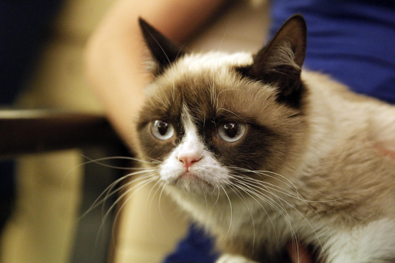 "Tard, the Grumpy Cat, doesn't shake her grumpy face because she has feline dwarfism, a condition, her owners say, causes her to have small sighs and stiff back legs. Other than that, they say, she is a completely ""healthy and happy cat."""