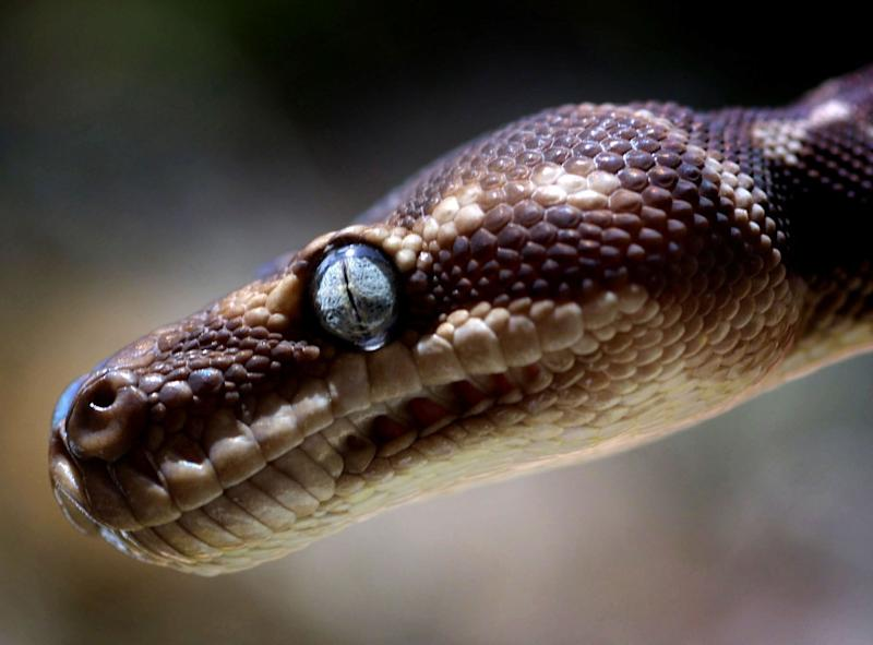 Civil serpent: The education department employee said a snake had snaffled the money