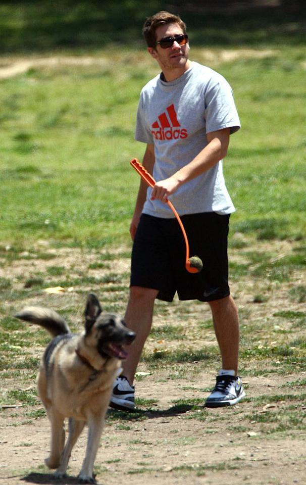 "Jake Gyllenhaal and his German Shepherd play in a Hollywood dog park. <a href=""http://www.x17online.com"" target=""new"">X17 Online</a> - May 12, 2007"