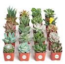 """<p><strong>Shop Succulents</strong></p><p>amazon.com</p><p><strong>$39.99</strong></p><p><a href=""""https://www.amazon.com/dp/B018WLMXG2?tag=syn-yahoo-20&ascsubtag=%5Bartid%7C10050.g.23480472%5Bsrc%7Cyahoo-us"""" rel=""""nofollow noopener"""" target=""""_blank"""" data-ylk=""""slk:Shop Now"""" class=""""link rapid-noclick-resp"""">Shop Now</a></p><p>Whether or not she has a green thumb, she'll love and appreciate this fun gift. You can choose from a pack of four, 12, or 20 to maximize the greenery.</p>"""