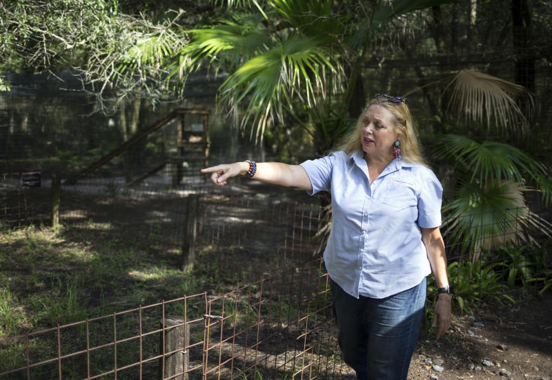 """FILE - In this July 20, 2017 file photo, Carole Baskin, founder of Big Cat Rescue, walks the property near Tampa, Fla. Baskin was married to Jack """"Don"""" Lewis, whose 1997 disappearance remains unsolved and is the subject of a new Netflix series """"Tiger King."""" (Loren Elliott/Tampa Bay Times via AP, File)"""