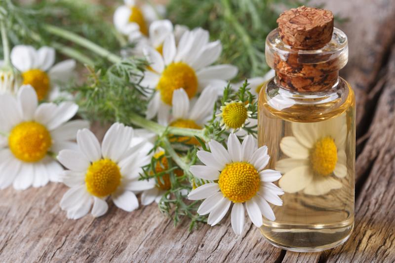 Vial of oil surrounded by chamomile flowers.