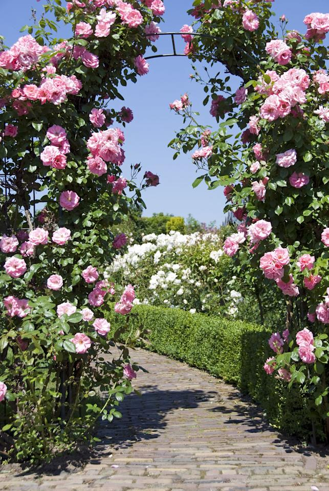 """<p><strong>Not only do garden arches add structure, but they introduce hints of colour and perfumed notes, and more importantly, </strong><strong>can transform any garden into a beautiful floral haven.</strong> </p><p>With an extensive range of designs and sizes in both wood and metal, there's something to suit all tastes and budgets, and even the smallest of gardens can benefit from one. Sue Fisher, horticulturalist of 35 years and <em>BBC Gardeners' World</em> writer has teamed up with <a rel=""""nofollow"""" href=""""https://www.husqvarna.com/uk/lawn-garden/when-working/maintenance/garden-arches-and-arbours/"""">Husqvarna</a> to share her expertise on the different styles of garden arches for your outdoor space.</p>"""