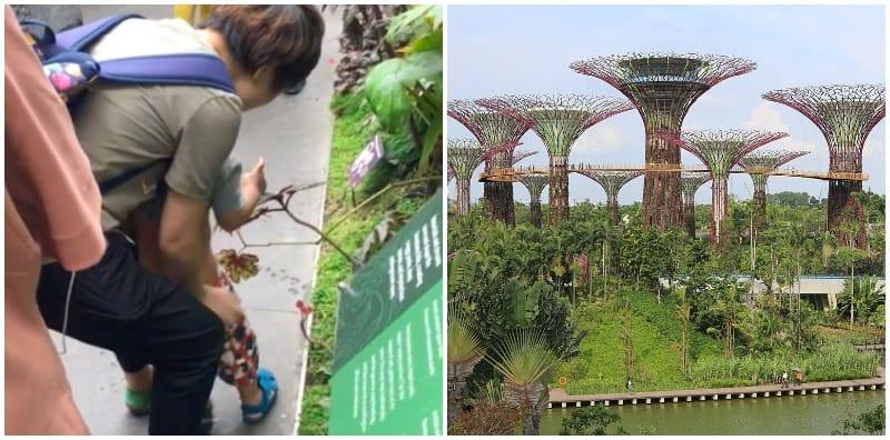 Video of boy peeing into plants at Gardens by the Bay angers Singaporeans