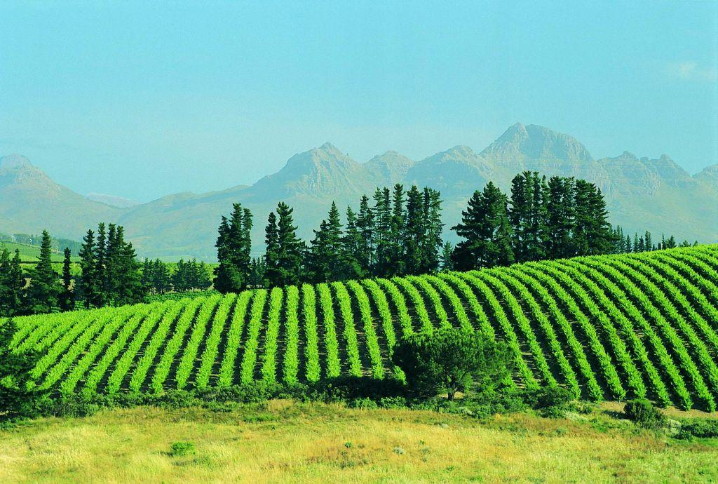 <b>STELLENBOSCH, SOUTH AFRICA </b><br>The spectacular scenery at a vineyard in South Africa's Stellenbosch area, about 50 km east of Cape Town. By 1700, Stellenbosch had become the wine capital of South Africa.