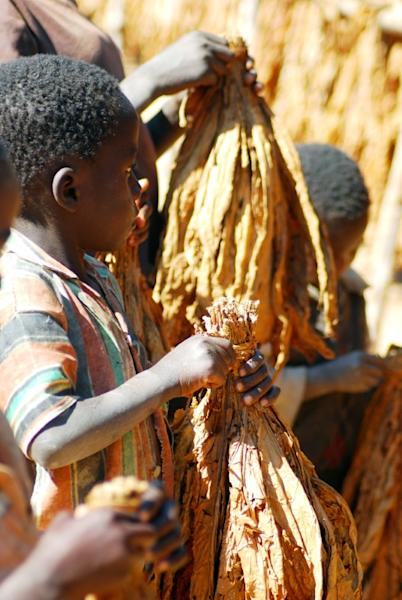 Malawian children carrying tobacco leaves on a farm in 2009. A government survey conducted two years ago found that more than one in three childen work (AFP Photo/FELIX MPONDA)