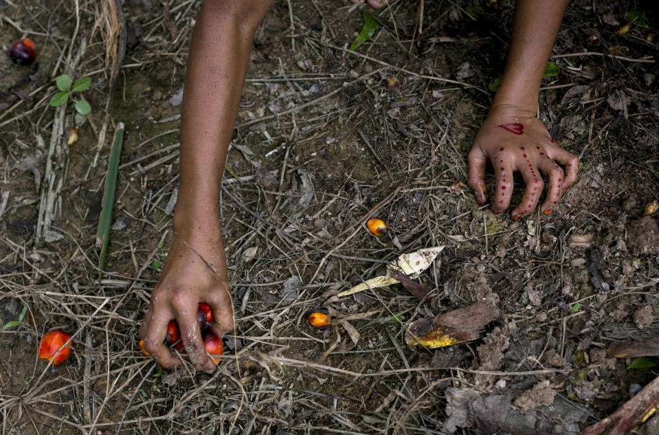 A child collects palm kernels from the ground at a palm oil plantation in Sumatra, Indonesia, Monday, Nov. 13, 2017. Children often work to help parents to reach their targets set by the vast plantations across Indonesia and neighboring Malaysia. (AP Photo/Binsar Bakkara)