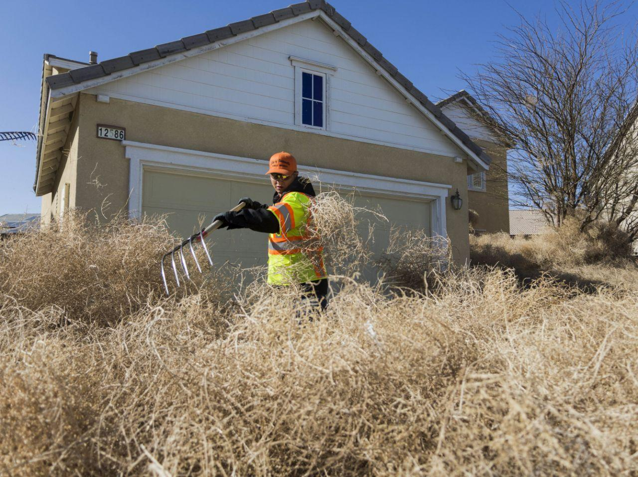 Flood of tumbleweeds submerge California town