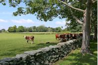 """<p><strong>The Drive: </strong>Route 77</p><p><strong>The Scene: </strong>Travelers can experience the rural riverfront of Rhode Island in this 14.29-mile journey that goes from <a href=""""https://go.redirectingat.com?id=74968X1596630&url=https%3A%2F%2Fwww.tripadvisor.com%2FTourism-g54117-Tiverton_Rhode_Island-Vacations.html&sref=https%3A%2F%2Fwww.goodhousekeeping.com%2Flife%2Ftravel%2Fg37101557%2Fmost-scenic-drives-in-america%2F"""" rel=""""nofollow noopener"""" target=""""_blank"""" data-ylk=""""slk:Tiverton"""" class=""""link rapid-noclick-resp"""">Tiverton</a> to <a href=""""https://go.redirectingat.com?id=74968X1596630&url=https%3A%2F%2Fwww.tripadvisor.com%2FTourism-g54092-Little_Compton_Rhode_Island-Vacations.html&sref=https%3A%2F%2Fwww.goodhousekeeping.com%2Flife%2Ftravel%2Fg37101557%2Fmost-scenic-drives-in-america%2F"""" rel=""""nofollow noopener"""" target=""""_blank"""" data-ylk=""""slk:Little Compton"""" class=""""link rapid-noclick-resp"""">Little Compton</a>; wine enthusiasts will especially love all the wineries along the trail!</p><p><strong>The Pit-Stop: </strong>Plan a picnic at Nanaquaket Pond, and relax while you take in the scenic views. </p>"""