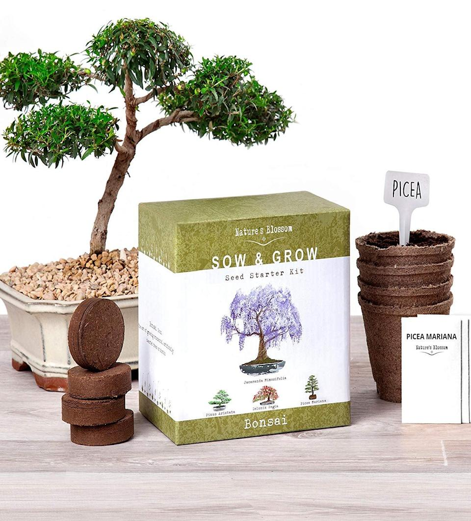 <p>This cool <span>Nature's Blossom Bonsai Garden Seed Starter Kit</span> ($25) comes with everything you need.</p>