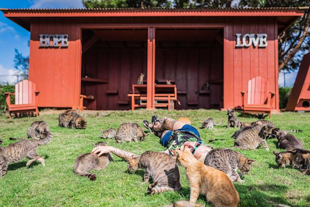 <p>Hannah Shaw, aka Kitten Lady, 30, is surrounded by rescued cats at the the Lanai Cat Sanctuary in Hawaii. (Photo: Andrew Marttila/Caters News) </p>
