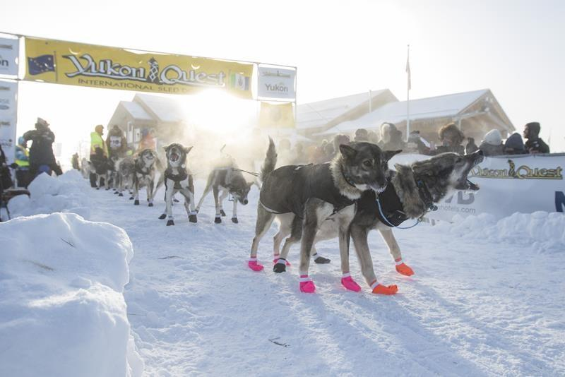 Canadian leg of Yukon Quest dog-sled race is cancelled due to pandemic