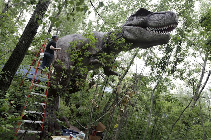 Scenic artist Loryn Williams puts finishing touches on a Tyrannosaurus T-Rex display at Field Station Dinosaurs in Secaucus, N.J., Friday, May 25, 2012. There will be 31 types of life-sized dinosaurs displayed at the Jurassic expedition that opens Saturday, May 26. (AP Photo/Mel Evans)