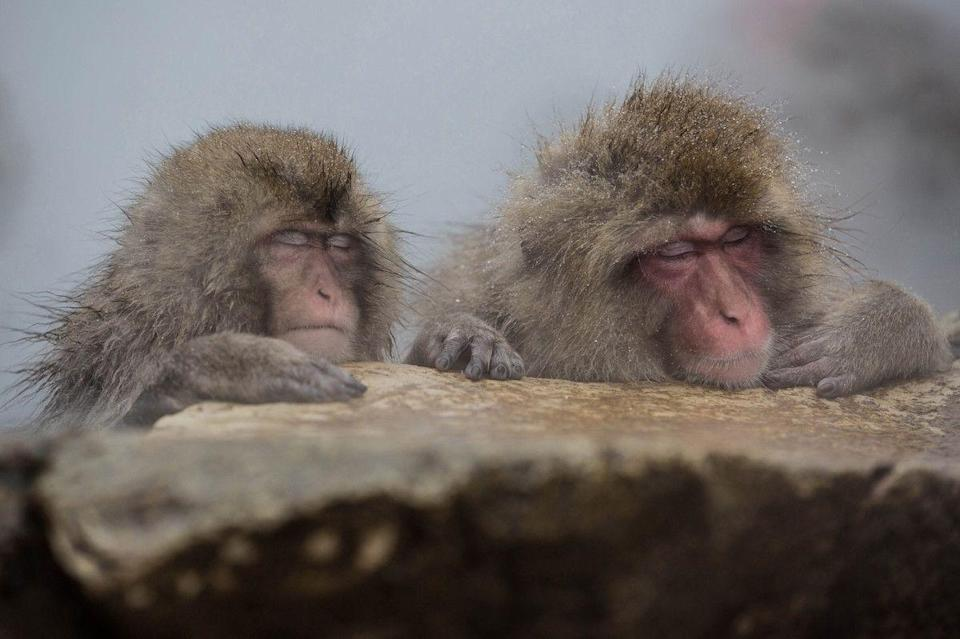 <p>Hot spring hangout in Jigokudani Monkey Park, Nagano, Japan // December 16, 2016</p>