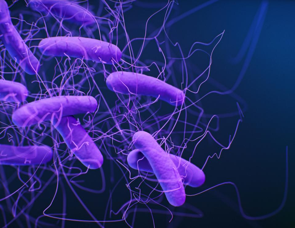 Illustration of the bacteria Clostridioides difficile. These rod shaped bacteria have flagella, which are used for motility. Clostridioides difficile (formerly known as Clostridium difficile) are anaerobic bacteria prevalent in soil. In humans, the bacteria can become established in the colon and disrupt the normal gut microbiota, particularly in people taking antibiotics. Toxins released by Clostridioides difficile can produce diarrhoea and inflammation.