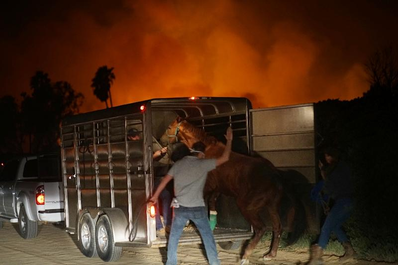 Volunteers rescue horses at a stable during the Lilac fire in Bonsall, California on December 7, 2017 (AFP Photo/Sandy Huffaker)