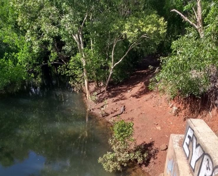 A photo of the 1.44m crocodile near the waters edge at Rapid Creek in the Northern Territory.