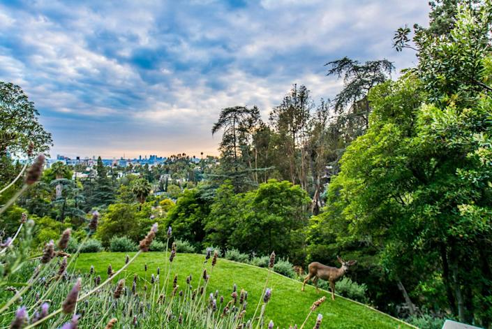 <p>There is actually so much wildlife on Artemesia's grounds, overlooking Hollywood, that Fenton has had to give up raising roses and other plants that deer find to be especially tasty treats.</p>