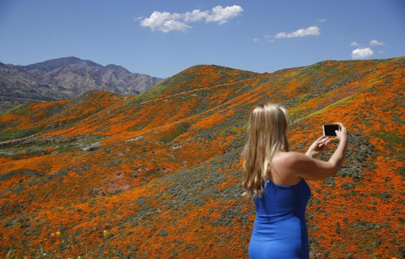 Renee LeGrand takes a picture among blooming wildflowers in Lake Elsinore.