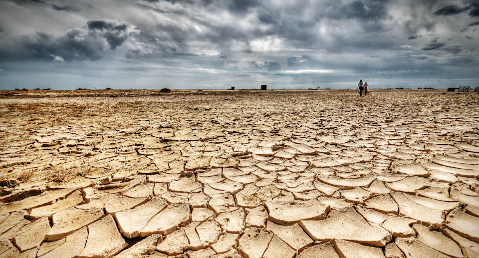 A drought affected landscape with cracked earth.