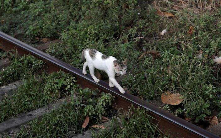The cat has escaped custody and remains at large - DINUKA LIYANAWATTE/REUTERS