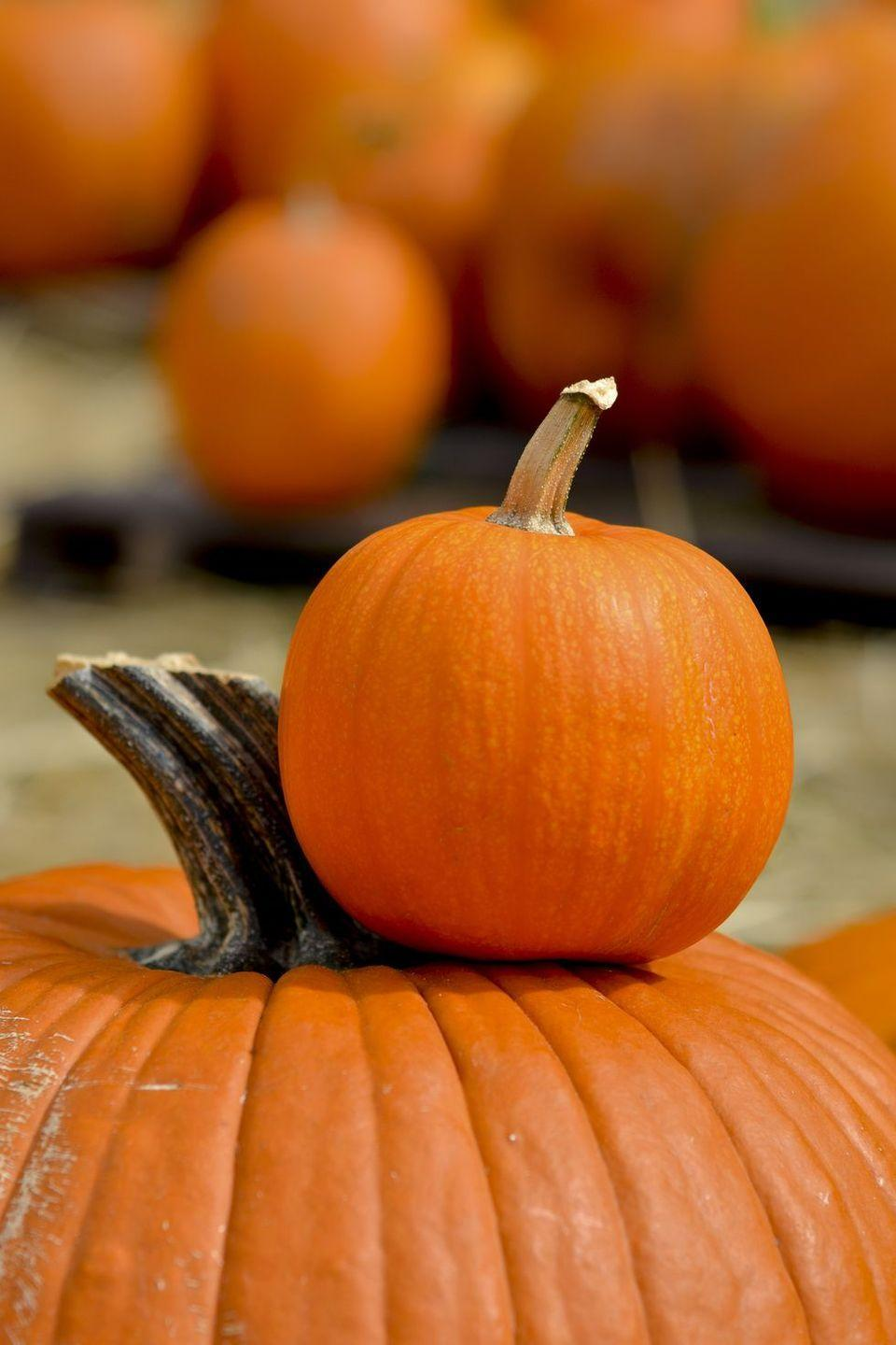 """<p>Answer: Halloween wouldn't be the same <a href=""""https://www.womansday.com/home/crafts-projects/g950/funny-pumpkin-carving-ideas/"""" rel=""""nofollow noopener"""" target=""""_blank"""" data-ylk=""""slk:without pumpkins,"""" class=""""link rapid-noclick-resp"""">without pumpkins,</a> and thankfully, there are plenty of gourds to go around. According to the United States Department of Agriculture's National Agricultural Statistics Service, in 2014 <a href=""""http://www.ers.usda.gov/topics/in-the-news/pumpkins-background-statistics.aspx"""" rel=""""nofollow noopener"""" target=""""_blank"""" data-ylk=""""slk:the top pumpkin-producing states"""" class=""""link rapid-noclick-resp"""">the top pumpkin-producing states</a> — Illinois, California, Ohio, New York, Pennsylvania, and Michigan — produced 1.31 billion pounds of pumpkins.<br></p>"""