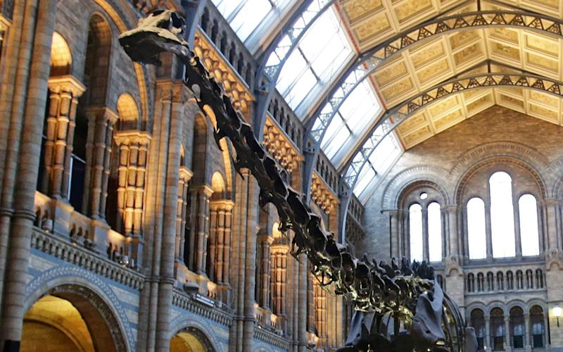 The Natural History Museum in London's Dippy the Diplodocus - which is currently on tour  - Credit: Yui Mok /AFP