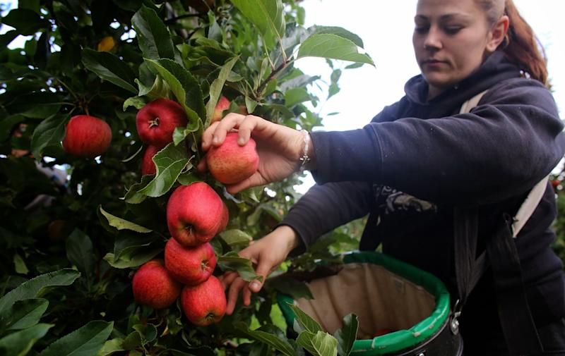 The industry has invested £100 million in streamlining production - but the crucial issue of finding pickers remains (Photo: British Apples and Pears)