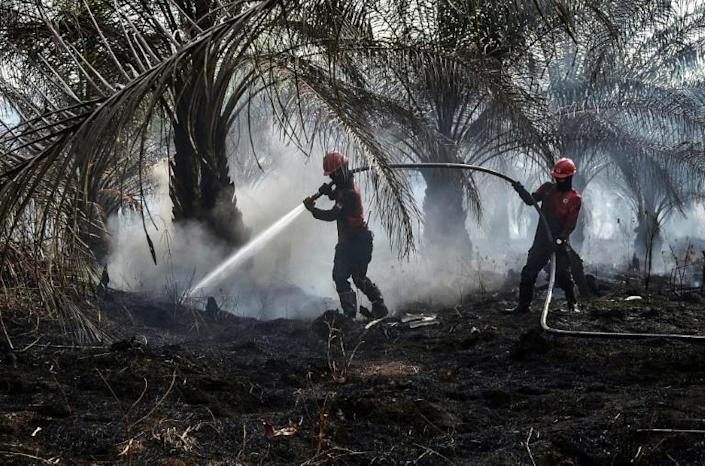 Palm oil production has been blamed by environmentalists for driving massive deforestation (AFP Photo/WAHYUDI)