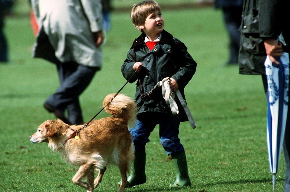 <p>Prince William walks a pet dog during a polo match.</p>