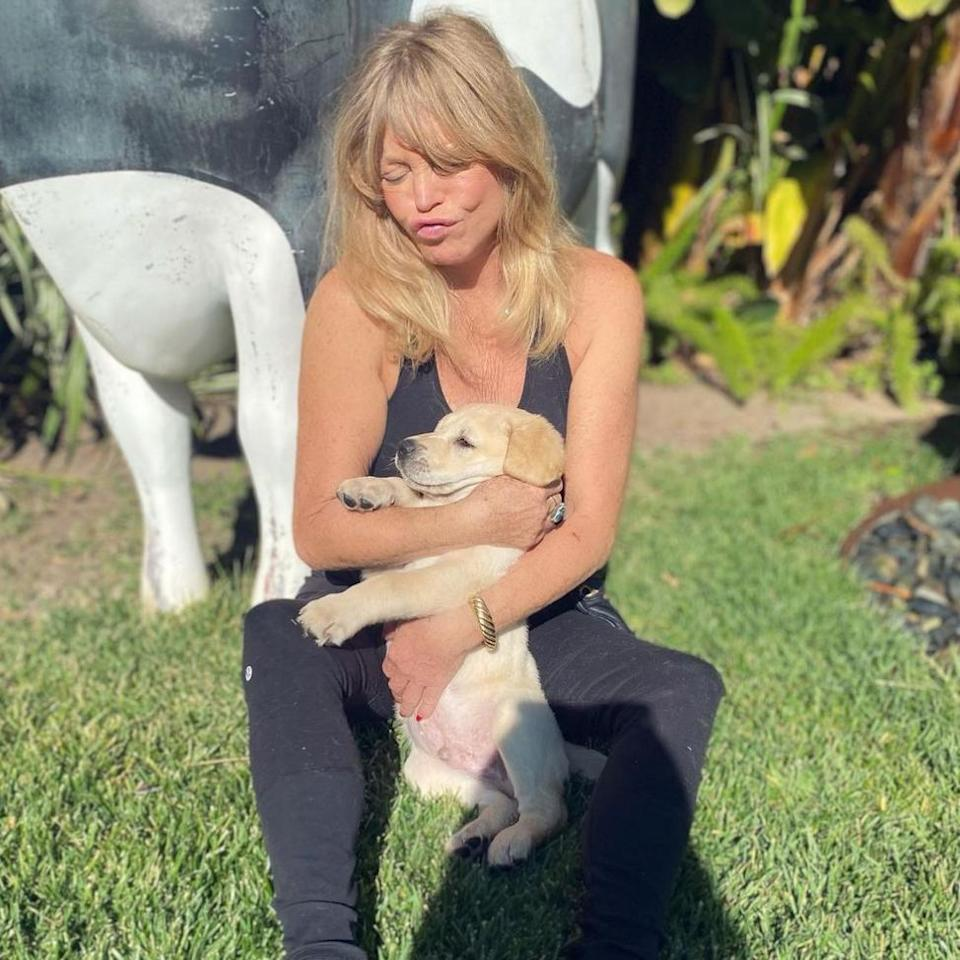 """<p>Welcome to the family <a href=""""https://people.com/pets/goldie-hawn-new-puppy-roy/"""" rel=""""nofollow noopener"""" target=""""_blank"""" data-ylk=""""slk:Roy Hawn Russell"""" class=""""link rapid-noclick-resp"""">Roy Hawn Russell</a>! Parents Goldie Hawn and Kurt Russell revealed that they added a new furry member to their family to kick off the new year.</p> <p>The actress <a href=""""https://www.instagram.com/p/CJzP9-uLb7c/"""" rel=""""nofollow noopener"""" target=""""_blank"""" data-ylk=""""slk:announced the exciting news"""" class=""""link rapid-noclick-resp"""">announced the exciting news</a> on Jan. 8 with an adorable photo of her cuddling the tiny golden puppy as he slid through her arms. </p> <p>""""Look what Santa rescued for me 🎅🏼 Introducing Roy Hawn Russell ❤️,"""" Hawn captioned the sweet shot, adding the hashtag, """"good boy roy.""""</p> <p>Roy is now the fifth dog to join the Hawn-Russell household.</p>"""