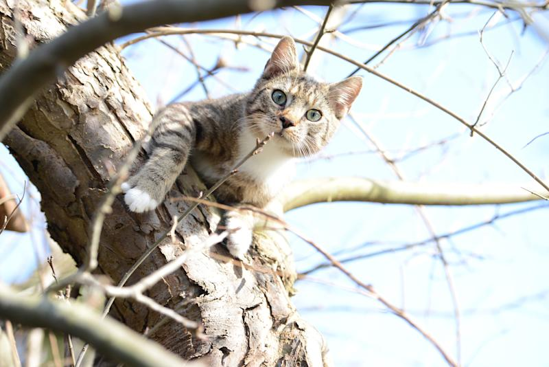 cat trying to hunt birds in a apple tree. my own cat