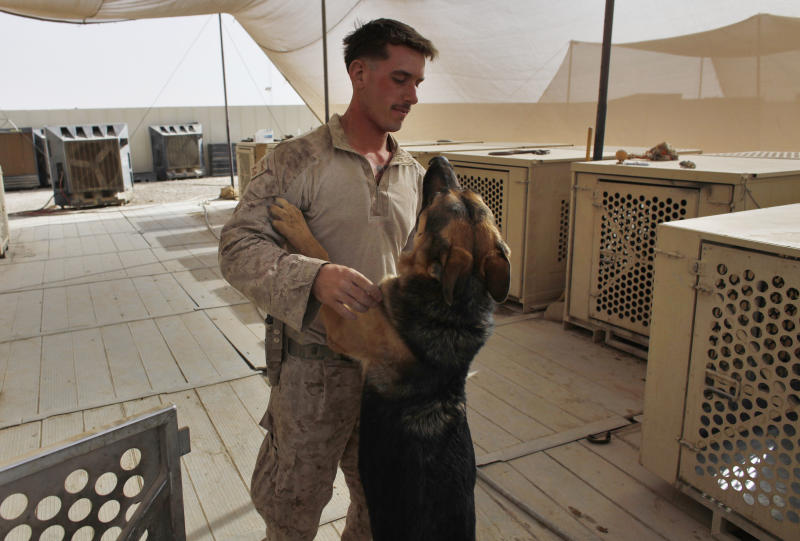 Military dogs and handlers patrol in Afghanistan