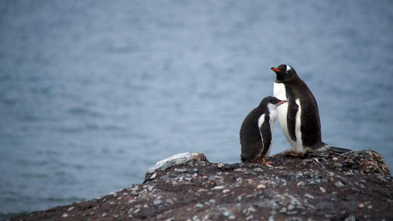 Confirmation for Antarctica's record high temperatures will take months says WMO