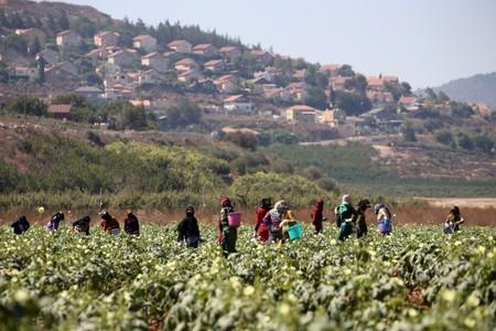 Farmers work near the border with Israel in the village of Khiam