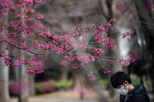 During the cherry blossom season, many Japanese gather for traditional 'hanami' parties under cherry blossom trees for copious quantities of food and drink